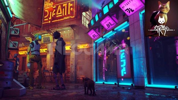 Image of Stray Video game